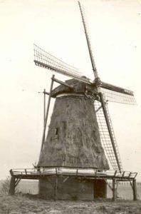 Molen Windesheim 1950